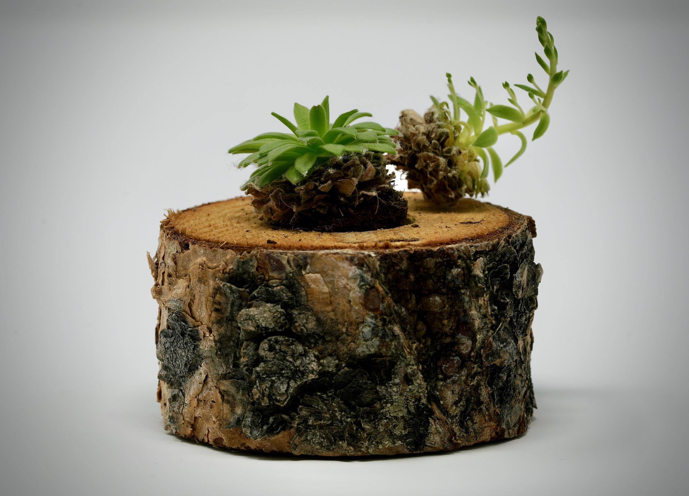 2020 02 06 Plant